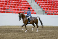 292 - Arabian Hunter Pleasure JTR 13 years and Under