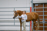 214 - HA Sport Horse Mares Hunter Type ATH
