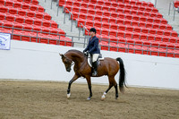 404 - Arabian Hunter Pl Junior Horse
