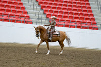 387 - Arabian West Pl Junior Horse