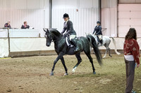 317 - Arabian Sport Horse Under Saddle Limit Horse