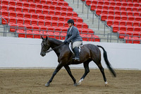 244 - HA Sport Horse Hunter Type Under Saddle