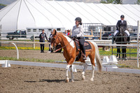 292 - Dressage Western Basic Level