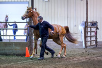 109 - Arabian Gelding In Hand 2 & over