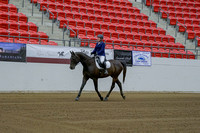 221 - HA Sport Horse Under Saddle Dressage Type ATR