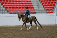 288 - Arabian Hunter Pleasure Choice/Elite ATR