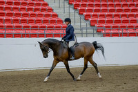 223 - HA Sport Horse Under Saddle Dressage Type