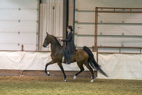 264 - American Saddlebred 5-Gaited Limit Horse