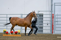 231 - HA Sport Horse Geldings Dressage Type ATH
