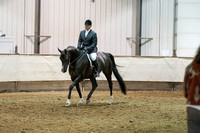 317A - HA Sport Horse Under Saddle Junior Horse