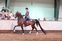 271 - American Saddlebred 3-Gaited Eng Show Pl Open
