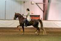 244 - American Saddlebred Eng 3-Gaited Show Pl Junior/Novice Horse