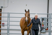 216 - HA Sport horse Geldings Hunter Type