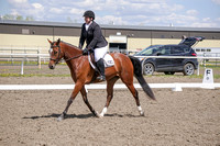 295A - Dressage Training Level Junior Horse