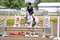 "612 - Arabian Handy Hunter ATR 2'6"" - 2'9"""