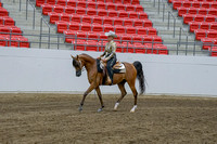 293 - Select Stallion Arabian Western Pleasure ATR Futurity